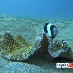SOUTH LOMBOK DIVE SITE - CROAL-WILLYS BEACH NIGHT